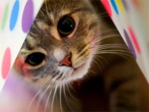 gatto_regole01g