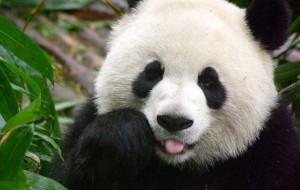 PANDA, non scattate quella foto