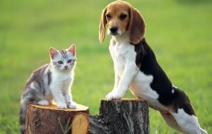 Beagle pomezia Menarini, agite ora amici!