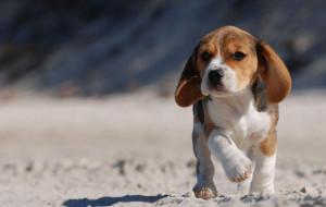 Corteo per la liberazione dei 32 beagle di Aptuit ex-GlaxoSmithKline
