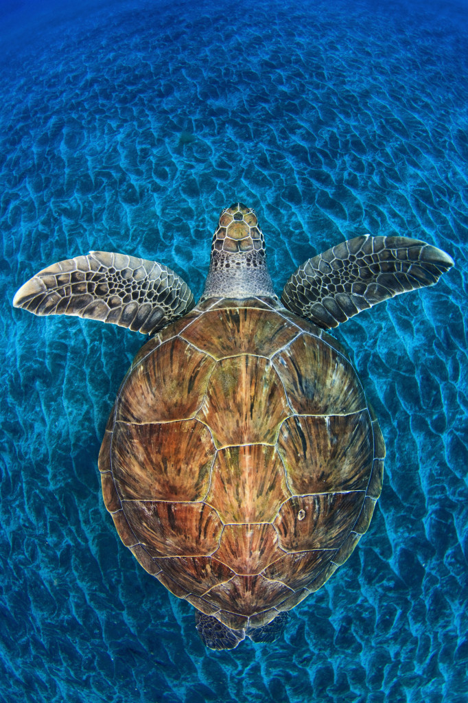 058 © Jordi Chias (Spain) Turtle gem Wildlife Photographer of the Year 2012