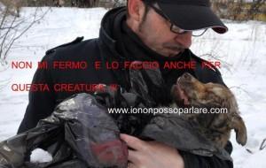Andrea Cisternino, un grande italiano  e la sua lotta estrema in difesa dei randagi dell'Ucraina