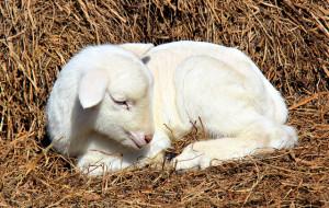 Appello della Lav per una Pasqua cruelty free.