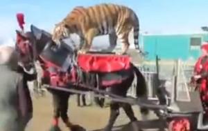 Sequestrati e affidati alla Lav tutti gli animali del Circo Martin: è la prima volta in Italia LaStampa.it