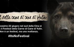 Antonello Palla Italy Comm. Manager Animals Asia: il commercio della carne di cane e di gatto in Cina e non solo…