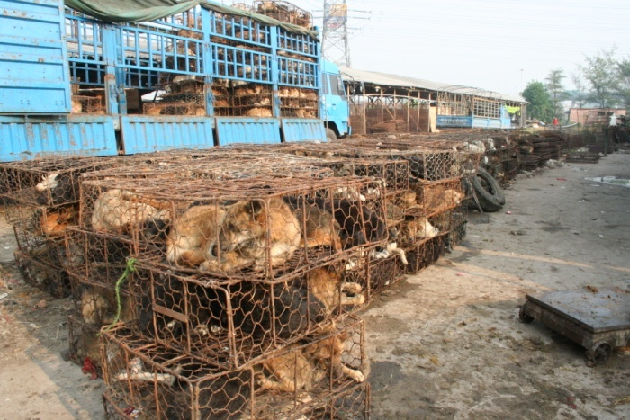 FIG 10 A rusty transport vehicle covered in dog fur and blood loaded with a mass of cages