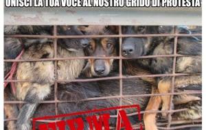 OIPA-ACPA: carne di cane petizione per chiedere al governo vietnamita di vietarla