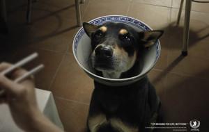 I Bok Days sono cominciati e in Corea del Sud si annuncia una vera mattanza di cani.