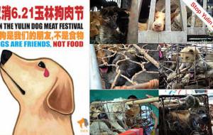 A Expo Milano 2015 si parli del Festival di Yulin