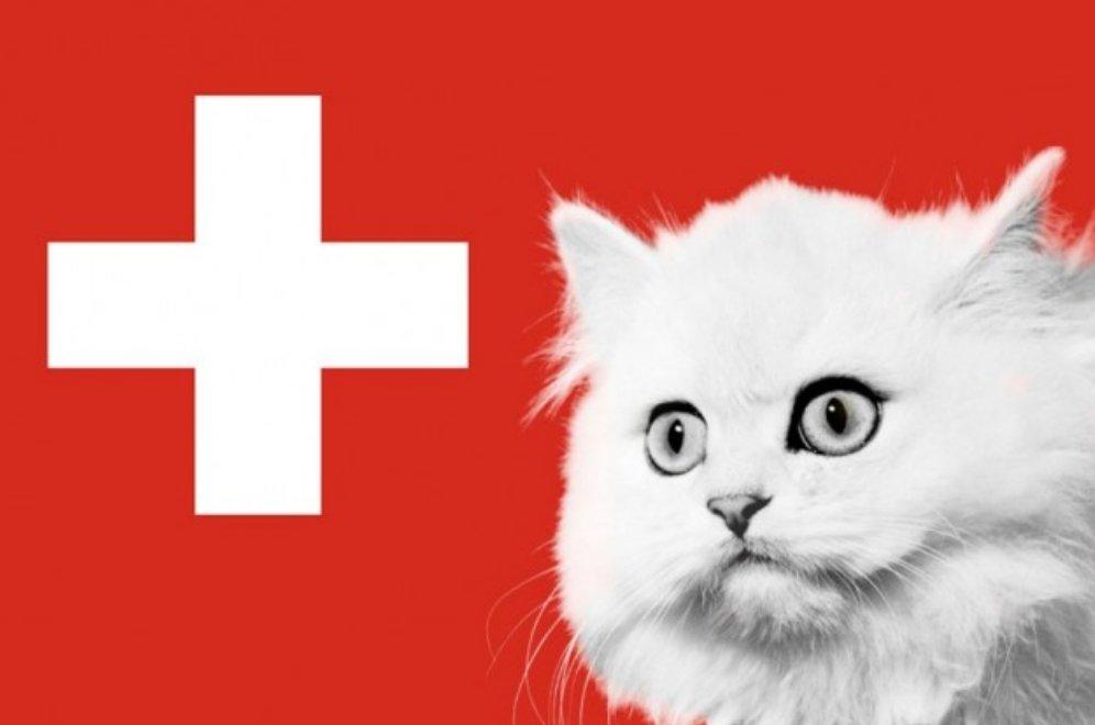 svizzera gatto