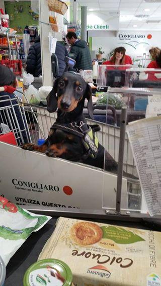 Palermo Arriva Il Carrello Della Spesa Per Cani A Noi La Parola