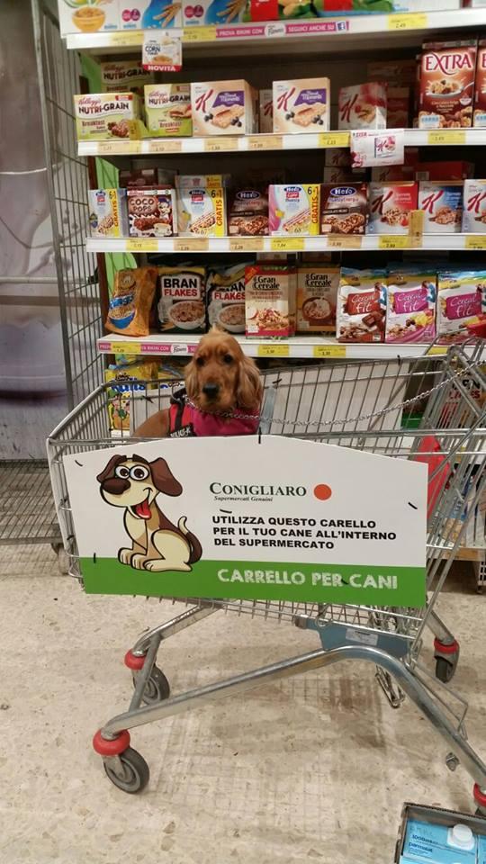 spesa-online-palermo-carrello-cani