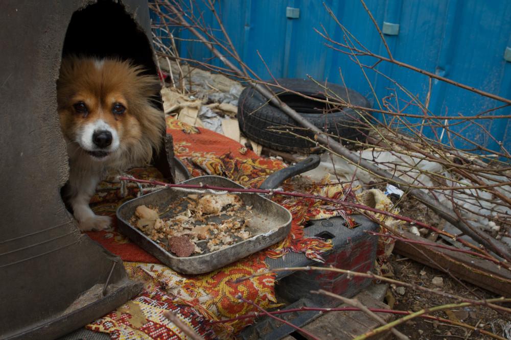 dog living outside in Korea