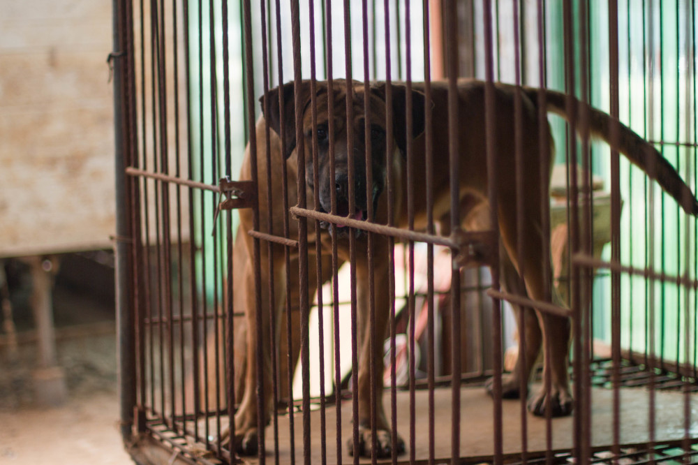 dog meat farm 4