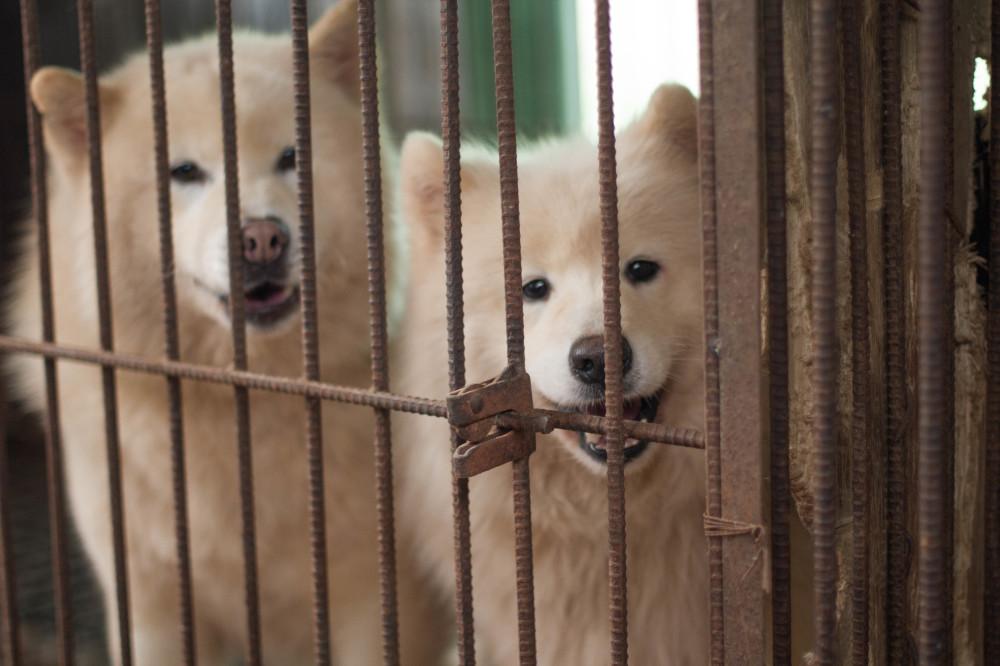 dog meat farm3