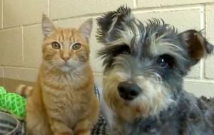Romeo e Giulietta, un gatto e un cane innamorati in un rifugio californiano LaStampa.it